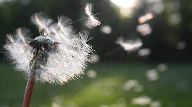 alérgicos al polen